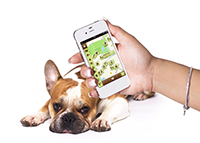 Dog's Places Smartphone & Hund